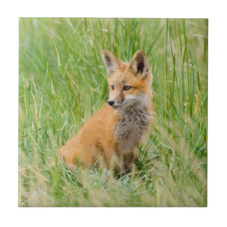 Red Fox Kit in grass near den Small Square Tile