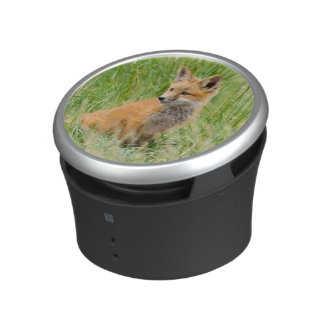 Red Fox Kit in grass near den Speaker