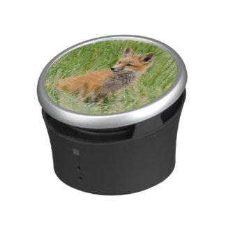 Red Fox Kit in grass near den Speaker