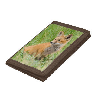 Red Fox Kit in grass near den Tri-fold Wallet