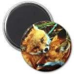 Red Fox Kits Refrigerator Magnets