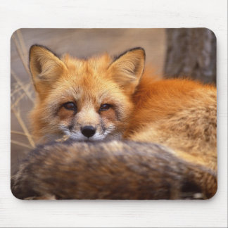 Red Fox Mouse Mat