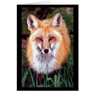 Red Fox Note Card