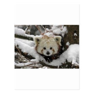 Red Fox Panda Bearcub Postcard