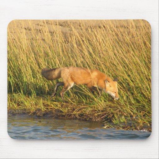 Red Fox Photograph Mousepads