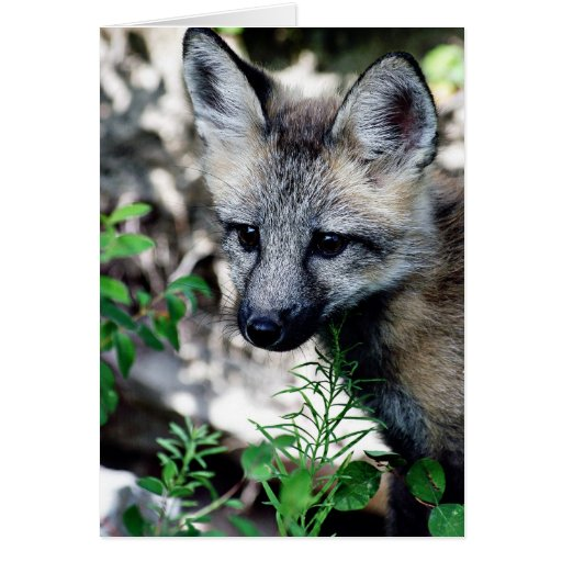 Red Fox Pup Card