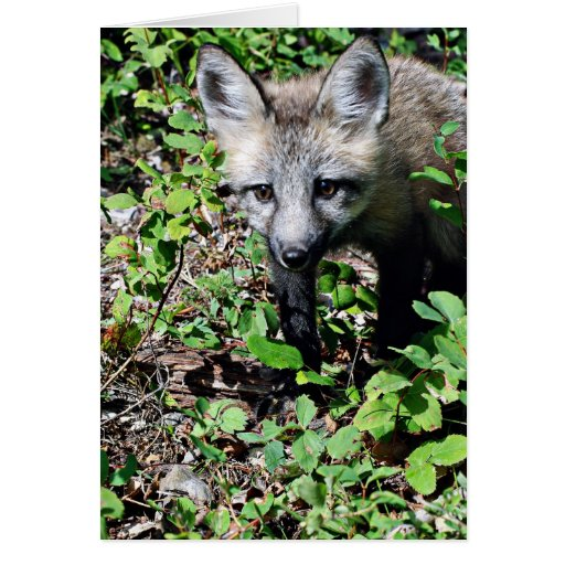 Red Fox Pup Greeting Cards