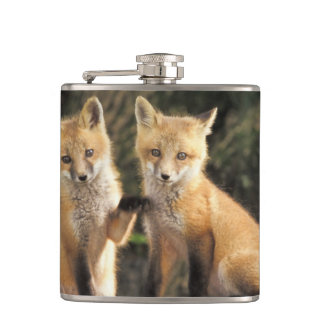 Red Fox pup in front of den Vulpes vulpes) Hip Flask