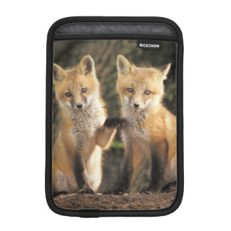 Red Fox pup in front of den Vulpes vulpes) iPad Mini Sleeve