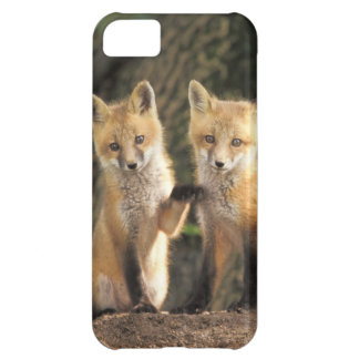 Red Fox pup in front of den Vulpes vulpes) iPhone 5C Case