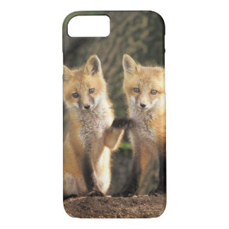 Red Fox pup in front of den Vulpes vulpes) iPhone 8/7 Case
