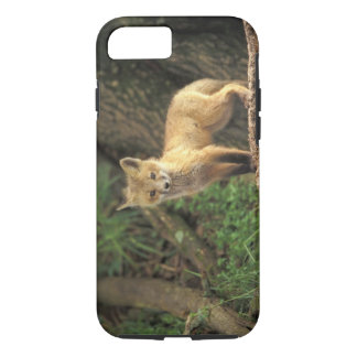 Red Fox pup in front of den (Vulpes vulpes) iPhone 8/7 Case
