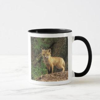 Red Fox pup in front of den (Vulpes vulpes) Mug