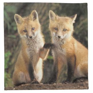 Red Fox pup in front of den Vulpes vulpes) Napkin