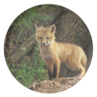 Red Fox pup in front of den (Vulpes vulpes) Party Plates
