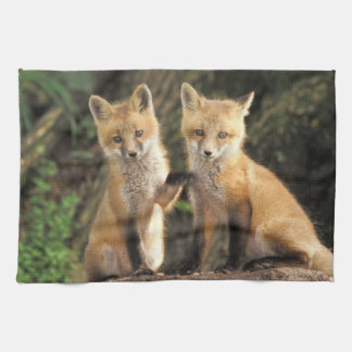 Red Fox pup in front of den Vulpes vulpes) Tea Towels