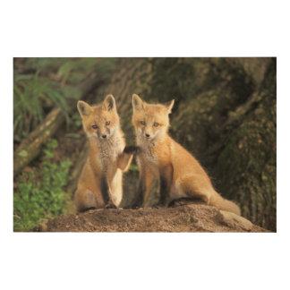 Red Fox pup in front of den Vulpes vulpes) Wood Wall Art