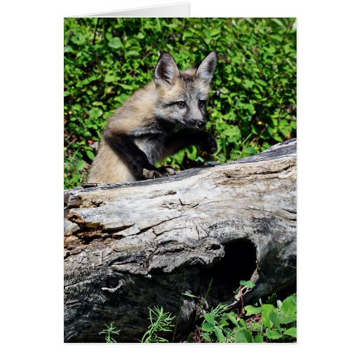 Red Fox Pup - Standing on a Log Cards