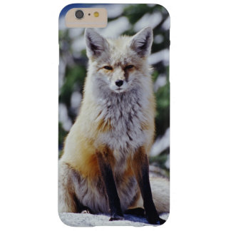 Red Fox sitting on snow bank, Vulpes, Mt. Barely There iPhone 6 Plus Case