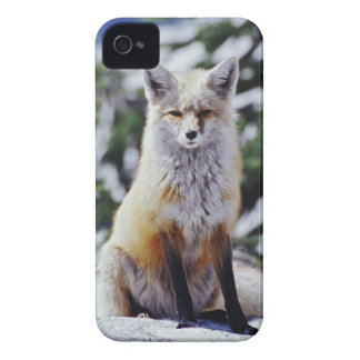 Red Fox sitting on snow bank, Vulpes, Mt. iPhone 4 Cases