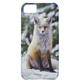Red Fox sitting on snow bank, Vulpes, Mt. iPhone 5C Case
