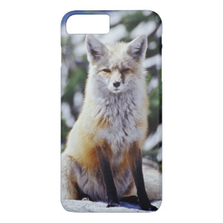 Red Fox sitting on snow bank, Vulpes, Mt. iPhone 8 Plus/7 Plus Case