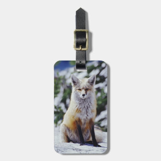 Red Fox sitting on snow bank, Vulpes, Mt. Luggage Tag