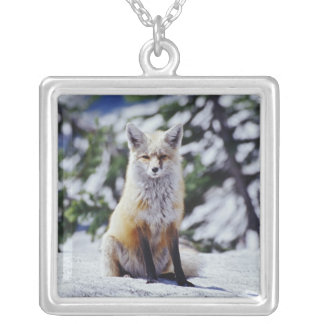 Red Fox sitting on snow bank, Vulpes, Mt. Silver Plated Necklace