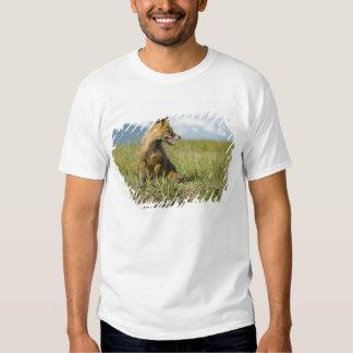 Red Fox, Vulpes fulva , Katmai National Park, Tshirt