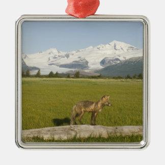 Red Fox, Vulpes fulva, on log, , Hallo Glacier Silver-Colored Square Decoration
