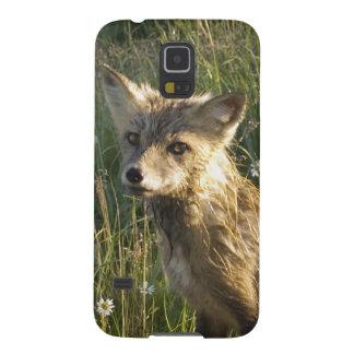 Red Fox, Vulpes fulva on log, Wildflowers, 2 Galaxy S5 Cover