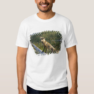 Red Fox, Vulpes fulva on log, Wildflowers, 2 Shirts