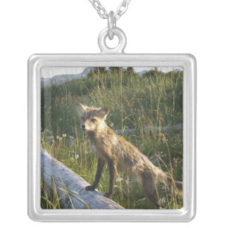 Red Fox, Vulpes fulva on log, Wildflowers, 2 Silver Plated Necklace