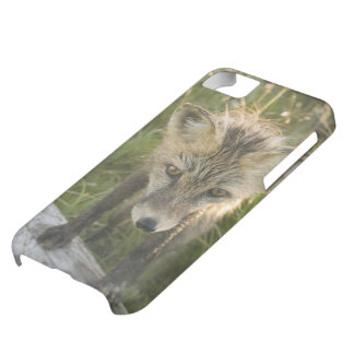 Red Fox, Vulpes fulva on log, Wildflowers, iPhone 5C Case