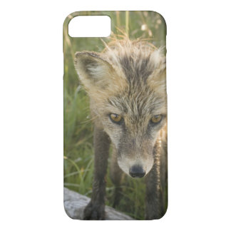 Red Fox, Vulpes fulva on log, Wildflowers, iPhone 8/7 Case