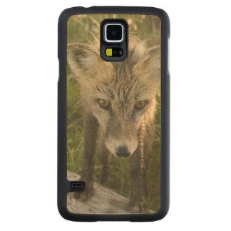 Red Fox, Vulpes fulva on log, Wildflowers, Maple Galaxy S5 Case