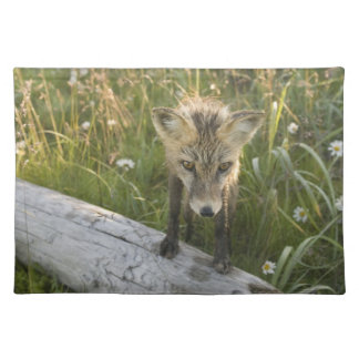 Red Fox, Vulpes fulva on log, Wildflowers, Placemat