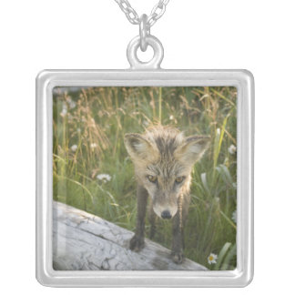 Red Fox, Vulpes fulva on log, Wildflowers, Square Pendant Necklace