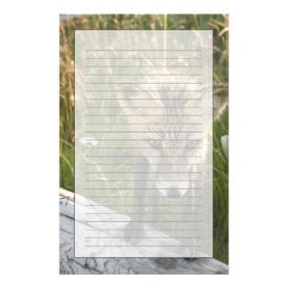 Red Fox, Vulpes fulva on log, Wildflowers, Stationery