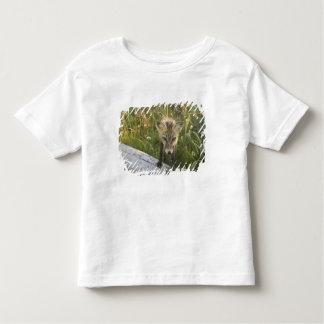 Red Fox, Vulpes fulva on log, Wildflowers, Toddler T-Shirt