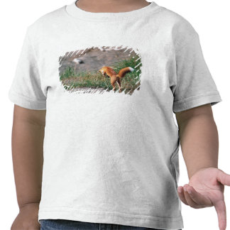 Red Fox, Vulpes vulpes, Alaska Peninsula, 3 Tee Shirts