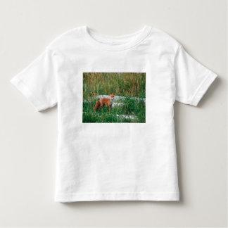 Red Fox, Vulpes vulpes, Alaska Peninsula, Toddler T-Shirt