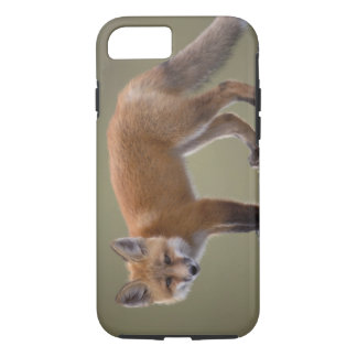 red fox, Vulpes vulpes, along the central North 2 iPhone 8/7 Case