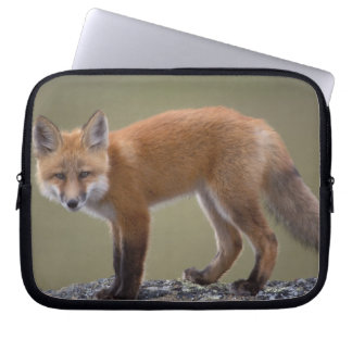 red fox, Vulpes vulpes, along the central North 2 Laptop Sleeve