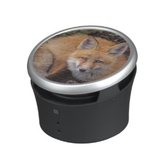 red fox, Vulpes vulpes, in fall colors along Bluetooth Speaker