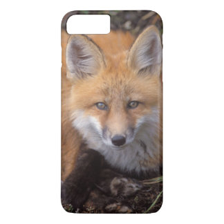 red fox, Vulpes vulpes, in fall colors along iPhone 8 Plus/7 Plus Case