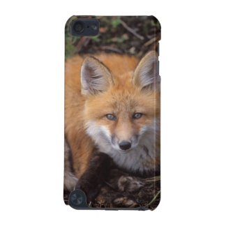 red fox, Vulpes vulpes, in fall colors along iPod Touch 5G Cover