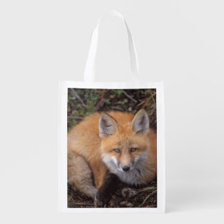 red fox, Vulpes vulpes, in fall colors along Reusable Grocery Bag