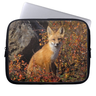 red fox, Vulpes vulpes, in fall colors along the Laptop Sleeve
