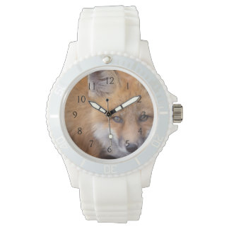 red fox, Vulpes vulpes, in fall colors along Wristwatch